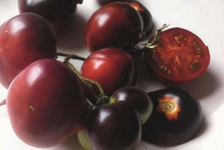 Tomate indigo Clakamas Blueberry