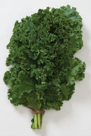 Chou frisé/kale Nash Green Kale