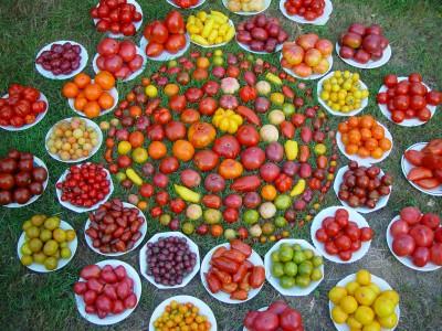 Mandala de Tomates Kokopelli