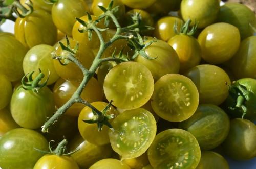 "Variété de tomate cerise verte créée par Tom Wagner, ""Verde Claro"""