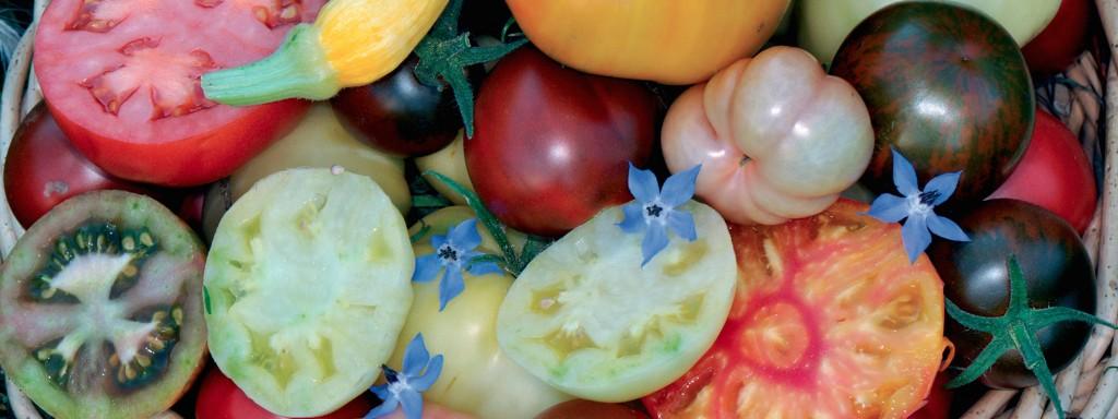 Diversité de tomates