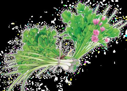 aromatiques-persils-ciboules-coriandre-ciboulette