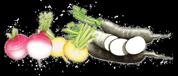 varietes-navets