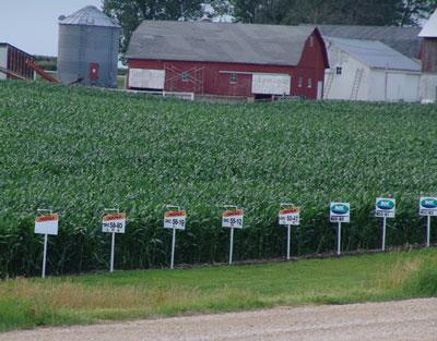 Culture de maïs dans l'Iowa aux US