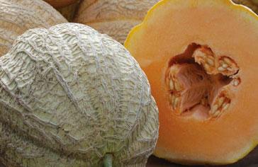 Melon Schoon's Hard Shell