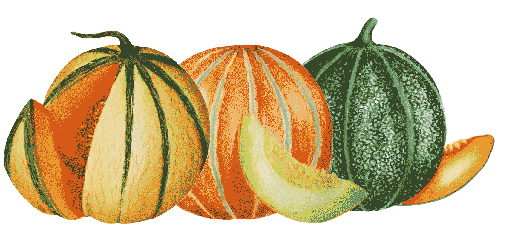 Illustration de melons