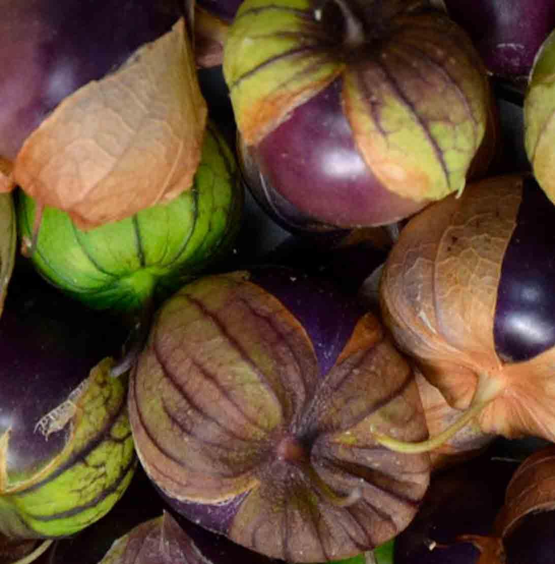 Purple de Milpa