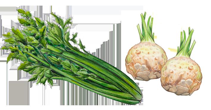 illustration celeris