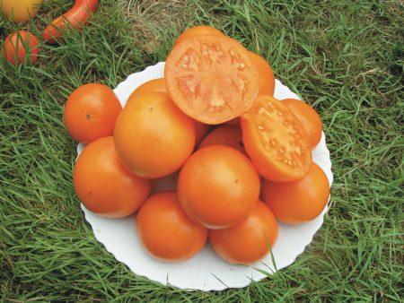 tomate orange Caro rich