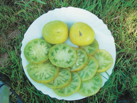 tomate verte evergreen