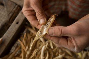 semences-reglementation