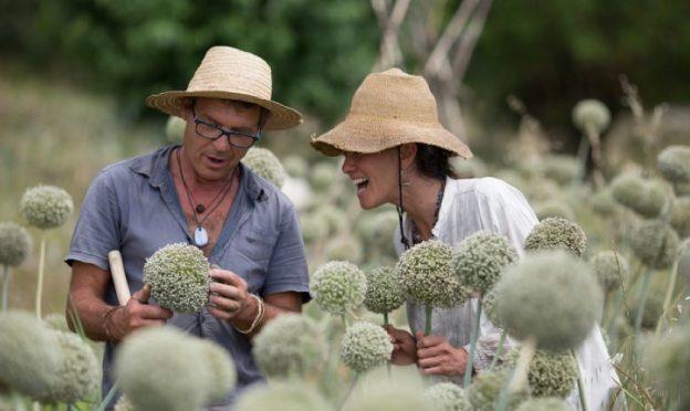 producteur-semences-poireaux
