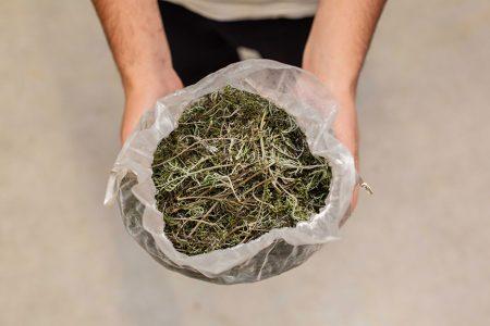 Plante sèche d'Artemisia annua pour infusion