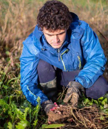 Récolte à la ferme Ocas Hopin Alba