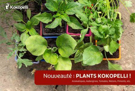 Nouveauté Plants Kokopelli produits en Ariège