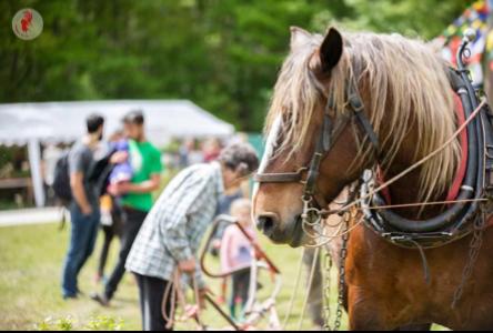 Association Prommata Démonstration - Travail du sol avec Vigne, le cheval de Roberto