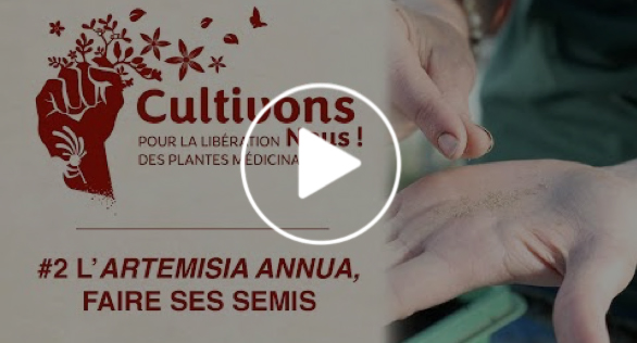 Video N°2 L'Artemisia annua, faire ses semis