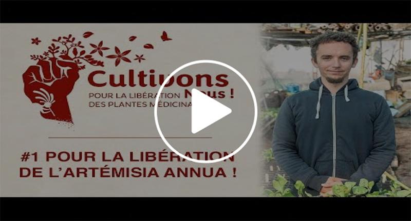 Video n°1 Pour la Libération de l'Artemisia Annua