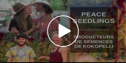 Video Rencontre avec Peace Seedlings producteur de Kokopelli