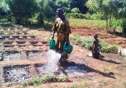Association Conte De Fees au Sénégal potager femme enfant