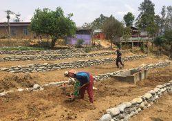 ID 1218, Birmanie, Nimalay farm, frères molcard, 10