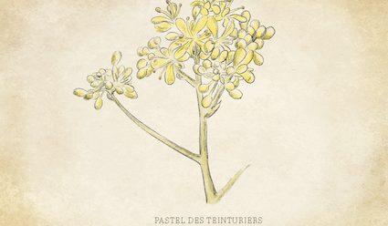 02. pastel_botanique