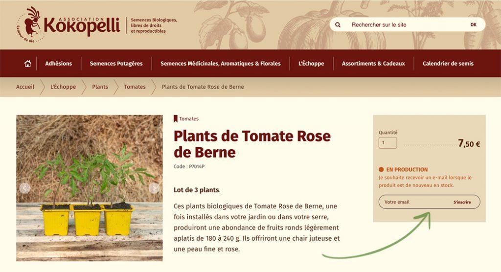 Plants de tomates rose de berne