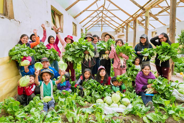 Récolte de Côtes de Blettes et Choux dans une desWalipinas à Potosi