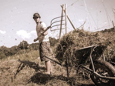 Mise en place d'un couvert végétal de Mulch à la Ferme de Kokopelli